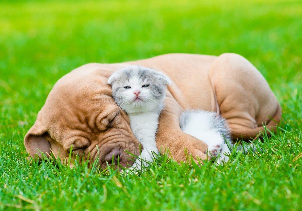 kuca i maca se grle