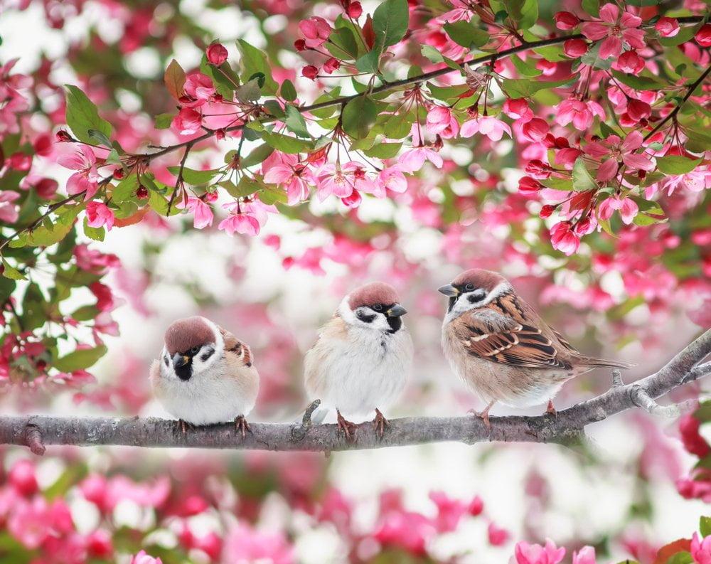 ptice na grani