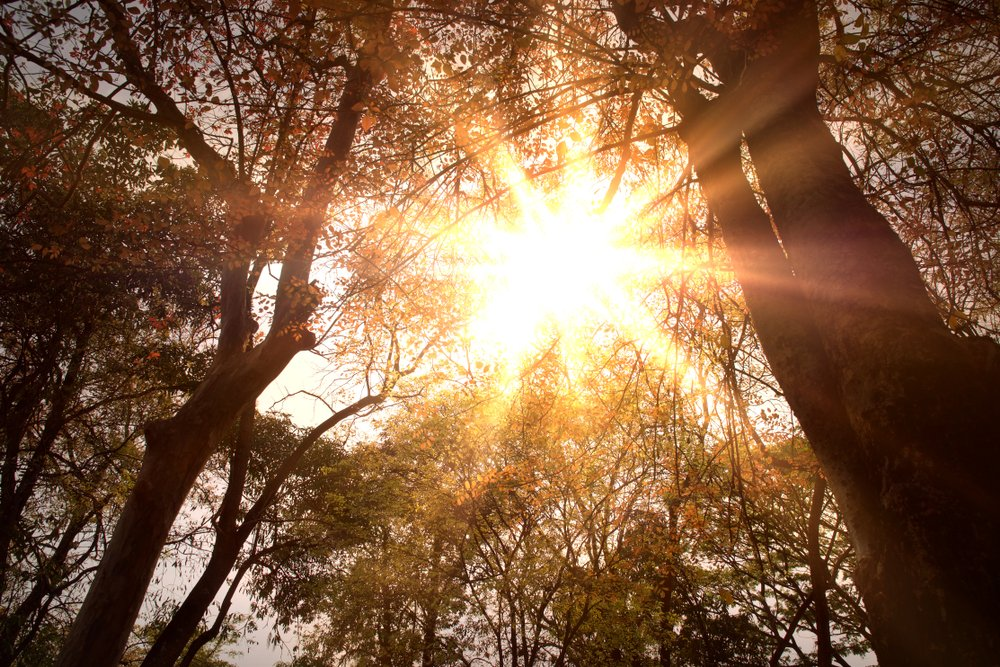 sunce kroz drvece