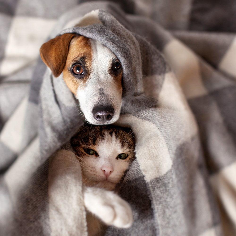 Pas i mačka u ćebetu